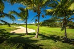 Rött klumpa ihop sig på utslagsplatsen, grund DOF Härligt landskap av en golfdomstol med palmträd Fotografering för Bildbyråer