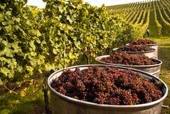 rött vin Royaltyfri Bild