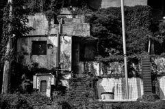 A ruína coberta por videiras Fotografia de Stock Royalty Free