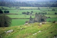 Ruína da abadia Imagens de Stock