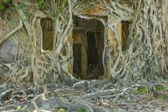 Ruína do edifício abandonado coberto com as raizes no console de Ross  fotografia de stock