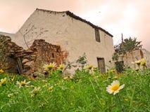 A ruína restaurada rústica em Fuerteventura com primeiro plano floresce Imagem de Stock Royalty Free