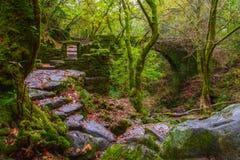 Ruínas antigas em uma floresta Imagens de Stock