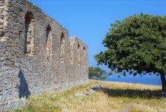 Ruínas da parede de pedra com árvore mediterannean Imagem de Stock