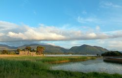 Ruínas do castelo de McCarthy Mor Irish no Lough Leane na Irlanda de Killarney fotos de stock royalty free