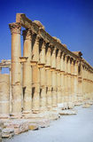 Ruínas do Palmyra antigo da cidade Imagem de Stock Royalty Free