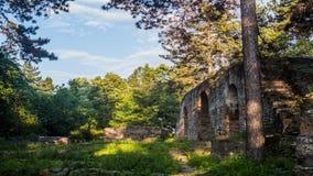 Ruínas na floresta com luz bonita video estoque