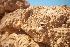 Ruínas no deserto fotografia de stock