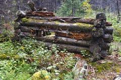 Ruínas velhas da cabana rústica de madeira do vintage na floresta do país de Kananaskis fotos de stock royalty free