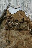 ruïne Stock Afbeeldingen