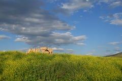 Ruïnes, hasankeyf Stock Afbeelding