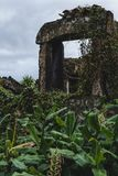 Ruïnes met Wijnstokken in Portugal worden overwoekerd dat stock fotografie