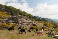 Ruïnes van de oude advertentie Cragum van stadsantiochia royalty-vrije stock foto