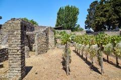 Ruïnes van muren en kolommen in Pompei Royalty-vrije Stock Foto's