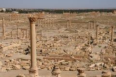 Ruïnes van palmyra Royalty-vrije Stock Foto's