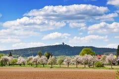 Ruïnes van Radyne-kasteel dichtbij Pilsen in het de lentelandschap, Tsjechische republiek stock foto's