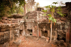 Ruïnes van temle, Angkor, Kambodja Royalty-vrije Stock Foto