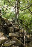 Ru?nas do templo antigo de Beng Mealea sobre a selva, Cambodia fotografia de stock