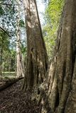 Ru?nes van de oude Tempel van Beng Mealea over wildernis, Kambodja royalty-vrije stock fotografie