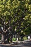 Rua alinhada árvore imagem de stock