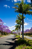 Rua alinhada árvore imagens de stock royalty free
