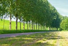 Rua ao longo de uma fileira das árvores Foto de Stock