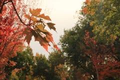 Rua colorida surpreendente unicidade enchida fotografia de stock