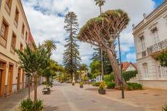 Rua com Dragon Tree grande no La Laguna imagem de stock