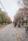 Rua cor-de-rosa imagem de stock