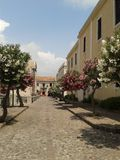 Rua da árvore da flor Imagem de Stock