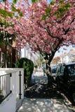 Rua da flor Foto de Stock