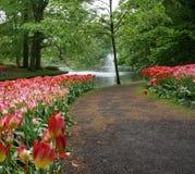 Rua das tulipas Foto de Stock Royalty Free