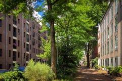 Rua de Amsterdão com árvores imagem de stock royalty free