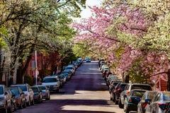 Rua de Baltimore com as árvores florescidas na mola fotografia de stock