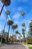 Rua de Beverly Hills, Los Angeles imagem de stock