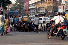 Rua de Kolkata fotos de stock royalty free