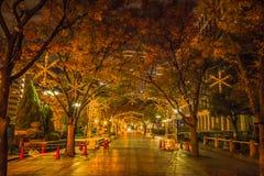 Rua de Midosuji com iluminação da luz da noite imagem de stock royalty free