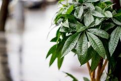 A rua decorada com arbusto verde Foto com fundo borrado, foco macio Após a chuva Imagens de Stock