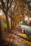 Rua do outono Imagens de Stock Royalty Free