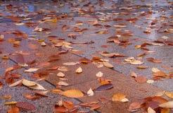 Rua do outono imagens de stock