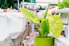 Rua do potenciômetro do vaso de flores Imagens de Stock