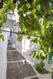 Rua inclinada da cidade de Pampaneira quadro pelo mandril da videira, Espanha imagens de stock royalty free