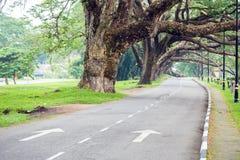 Rua no jardim do lago Fotos de Stock Royalty Free