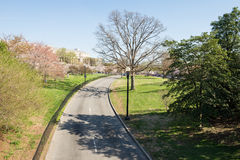 Rua no parque Foto de Stock Royalty Free