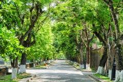 Rua obscuro verde maravilhosa na cidade imperial, matiz, Vietname imagem de stock