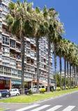 rua Palma-alinhada em Puerto de la Cruz Imagens de Stock