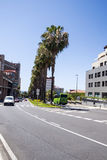 rua Palma-alinhada em Puerto de la Cruz Fotografia de Stock Royalty Free