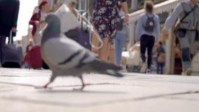 A rua pedestre, pessoa vai aproximadamente seu negócio Olhe do pavimento, multidão que apressa-se sobre seu negócio filme