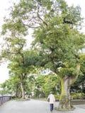 Rua principal de Kamakura Imagem de Stock Royalty Free