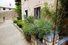 Rua protegida, estreita com as flores em uns potenciômetros e um gato no passeio foto de stock